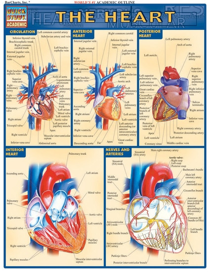 THE HEART LAMINATED REFERENCE GUIDE