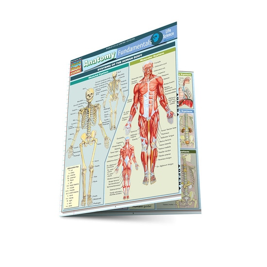 ANATOMY FUNDAMENTALS: LIFE SCIENCE LAMINATED STUDY GUIDE