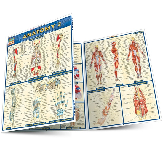 ANATOMY 2 LAMINATED STUDY GUIDE