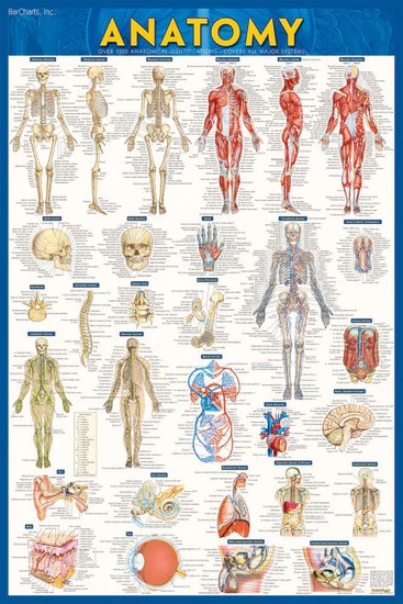 ANATOMY PAPER POSTER