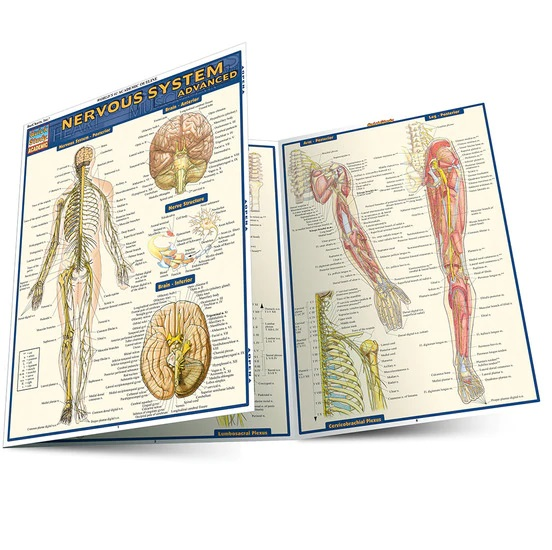 NERVOUS SYSTEM ADVANCED LAMINATED STUDY GUIDE