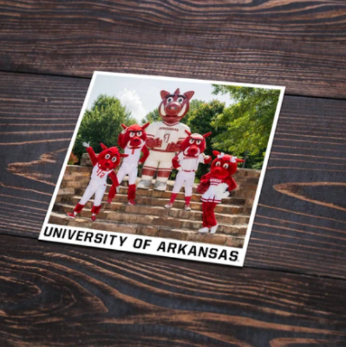 Arkansas Razorbacks Mascot Family Photo Sticker